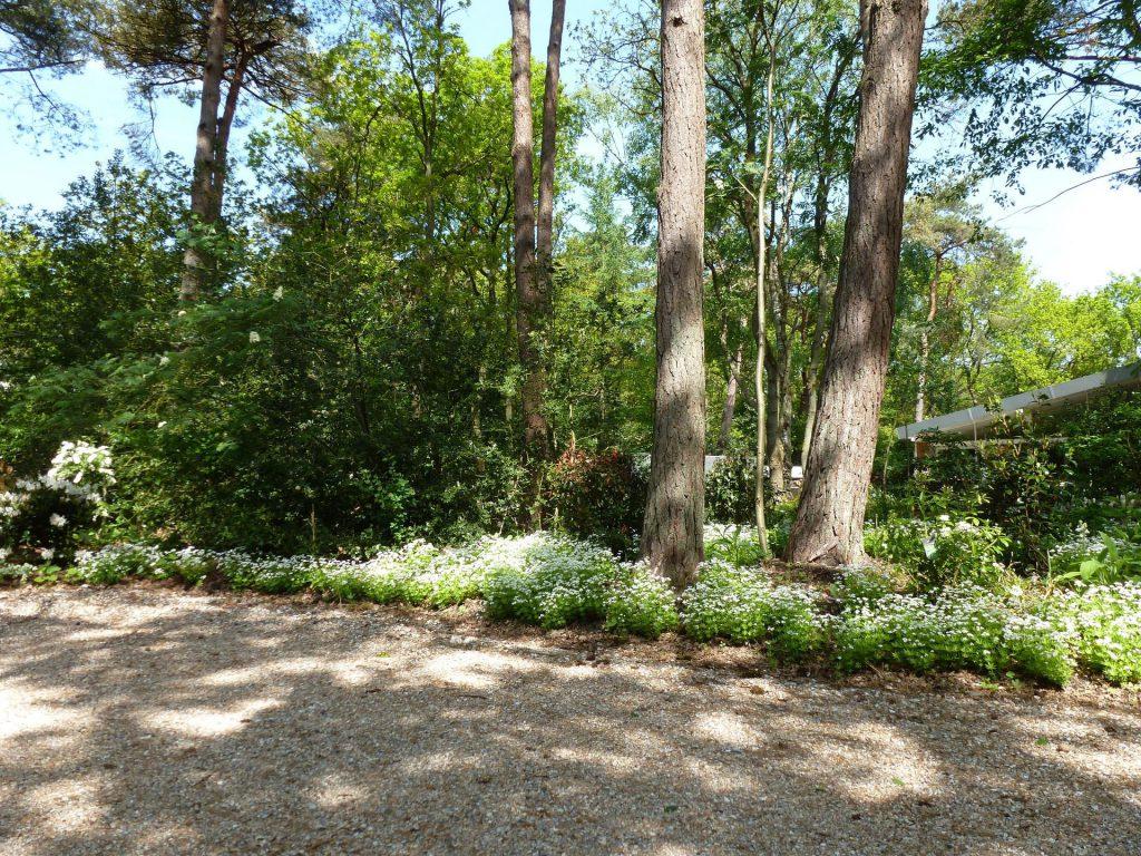 Een tuin in het bos, aangelegd door Barten Exclusieve tuinen